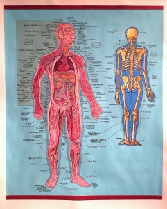 37_physiology